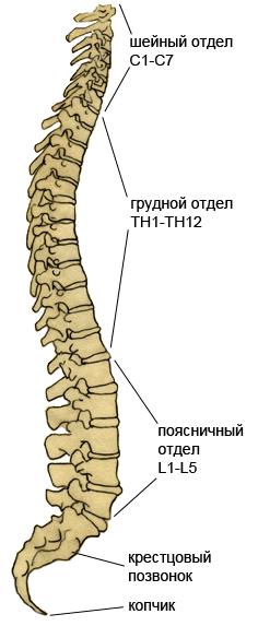 Расслабить мышцы спины